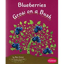 Blueberries Grow on Bushes
