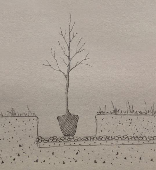 Consejos de jardinería - árboles para zonas húmedas
